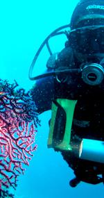 Dalmatia diving tour Diving in Dalmatia