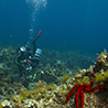 """Ionian islands"" diving tour"